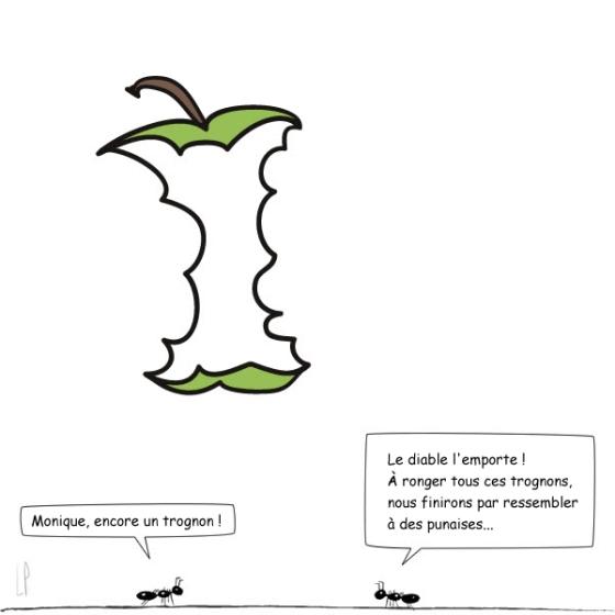 LES FOURMIS - Le trognon / Illustration Luc Pallegoix
